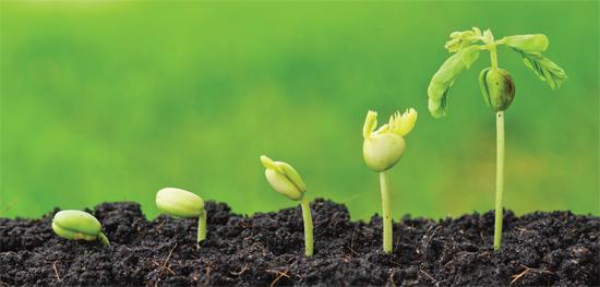 Growth Path to EMEA